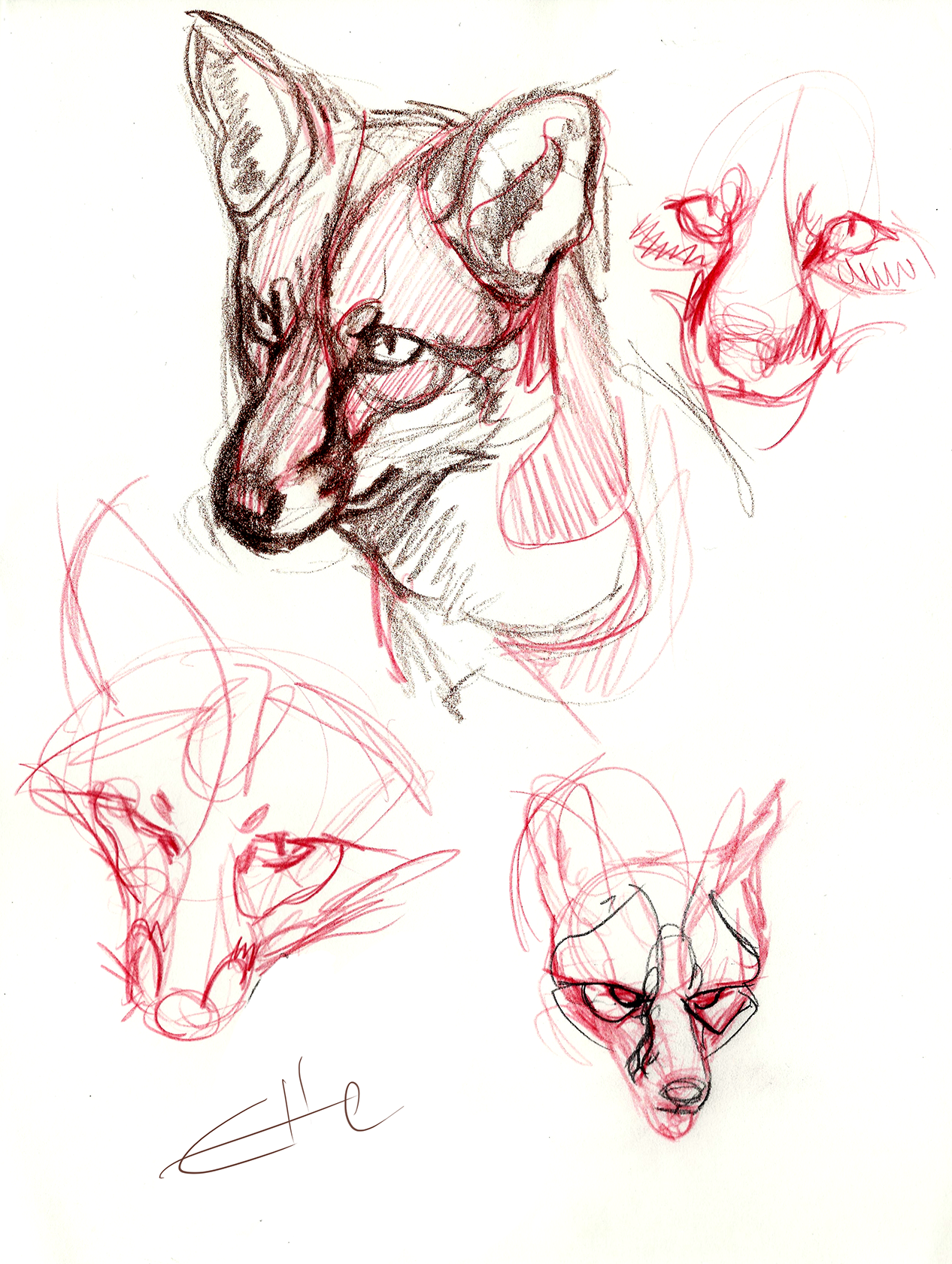 foxes from reference | Это весьма интересно | Pinterest | Foxes ...