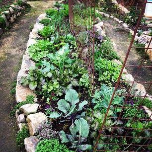 The Winter Kitchen Garden Star Apple Edible Gardens Edible Garden Edible Landscaping Garden Inspiration