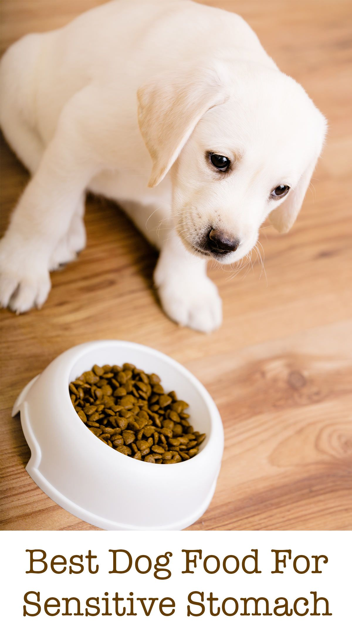 Best Dog Food For Sensitive Stomach Issues Tips And Reviews