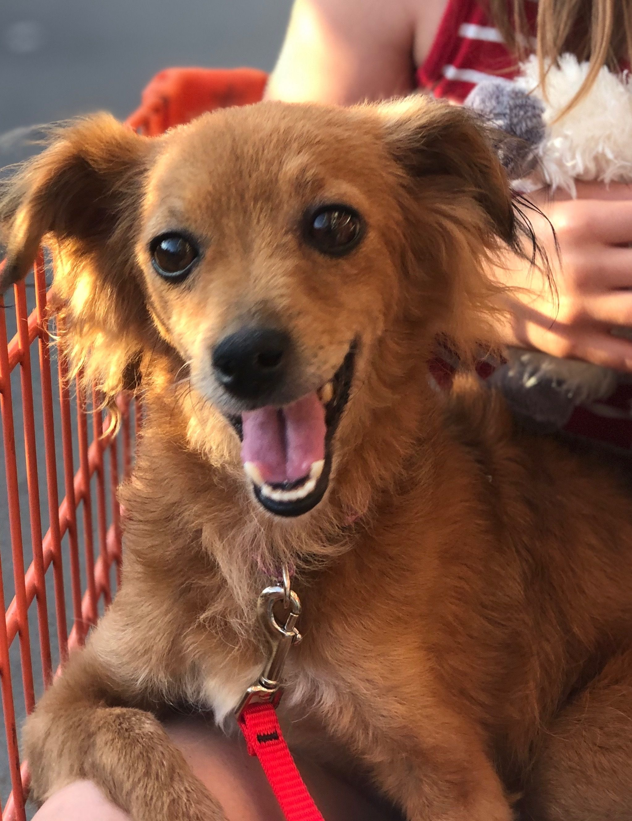 Adopt Ellie on Help homeless pets, Dog adoption