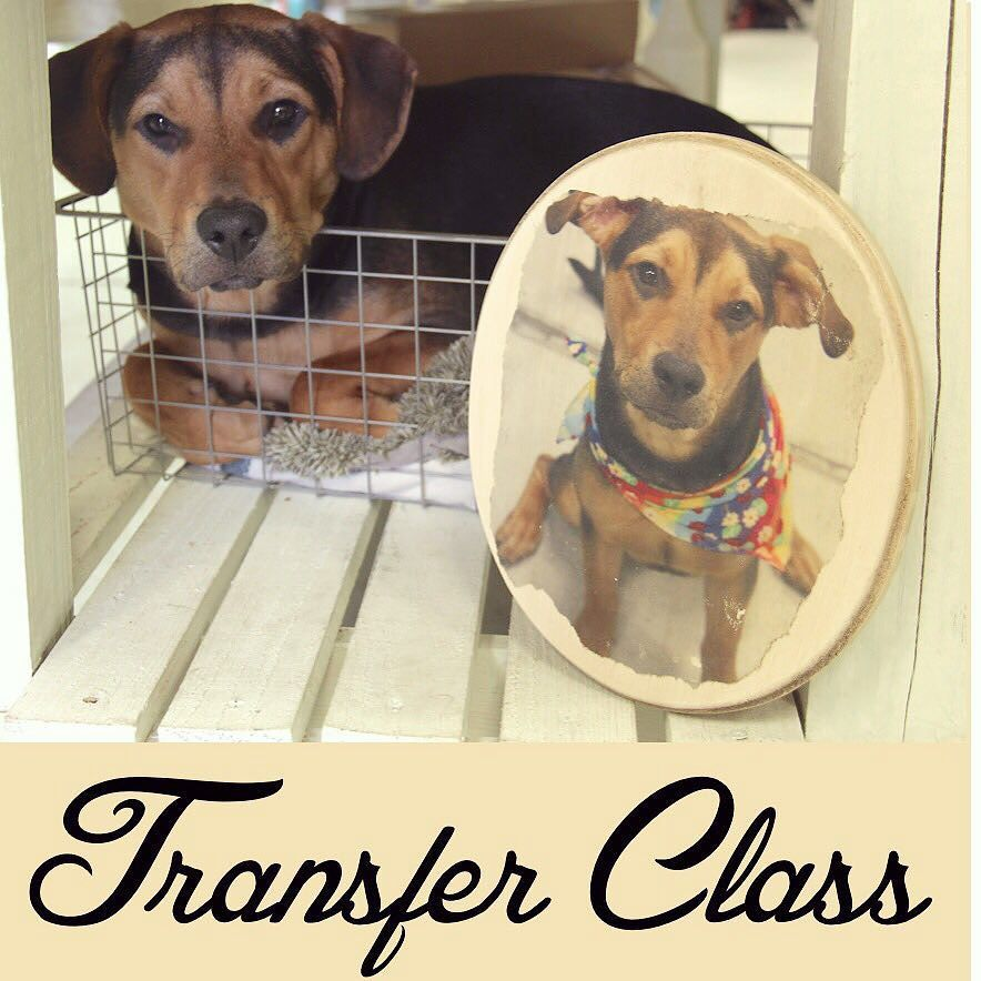 Our next transfer class is this Saturday the 10th of October from 11am-1:30pm. Message or call (321) 877-1829 to reserve your space! #transferclass #rescuedrelicsstudio #duketheshopdog #puppy #transfer #phototransfer #class #howto #diy #diyclass #thissaturday