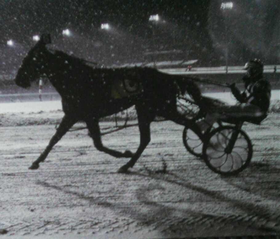 Snowing at the MEADOWLANDS Harness racing, Horses, Racing