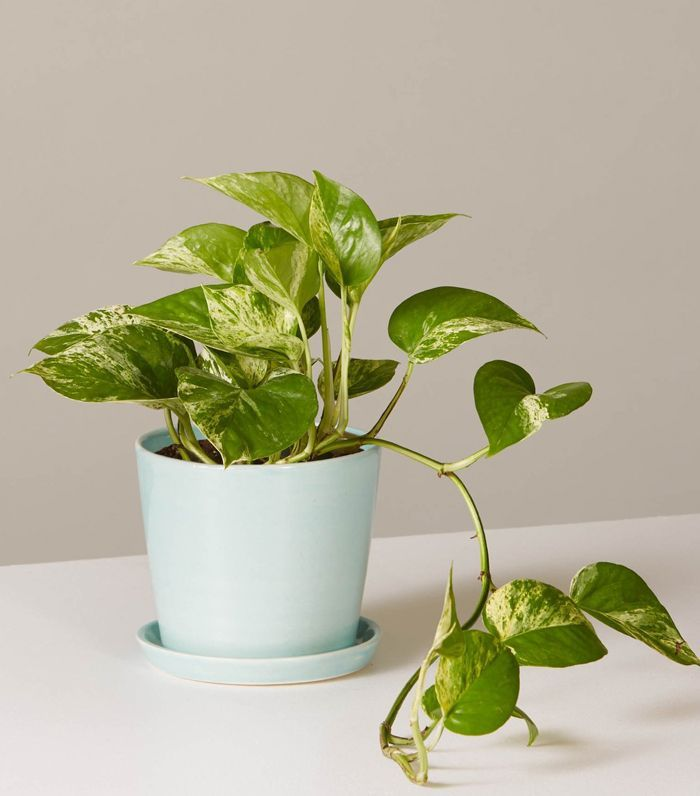 Is Your Home North Facing Or Doesn T Get A Ton Of Natural Light These Indoor Plants For Low Are Exactly What You Need