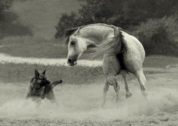 Фотограф Wojtek Kwiatkowski. Фотографии лошадей ...