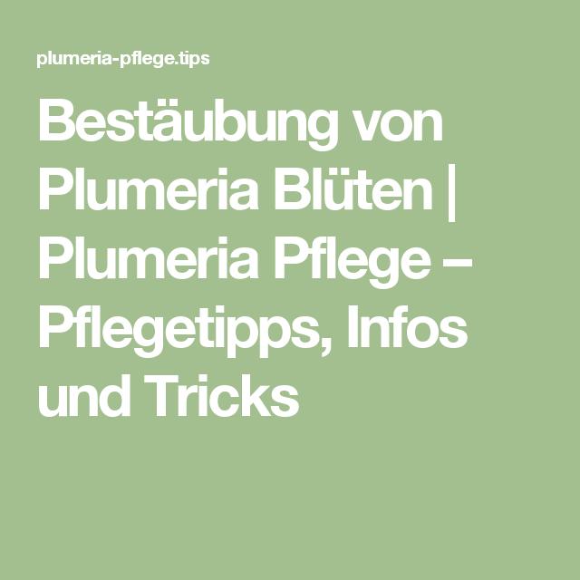 Bestäubung Von Plumeria Blüten | Plumeria Pflege ? Pflegetipps ... Garten Im September Pflege Tipps
