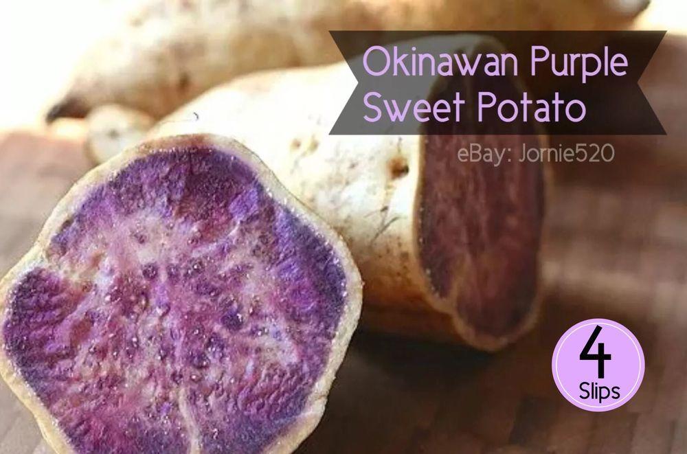 20 sweet potato Slips Okinawa //white and purple sweet potato Plants Cuttings
