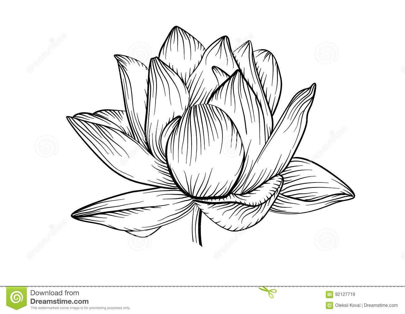 Download Ligne De Fleur De Vecteur De Nénuphar De Lotus