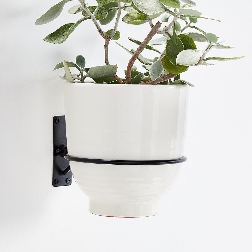 Wall Planter Hook Reviews Crate And Barrel In 2020 Wall Planter Crate And Barrel Planters
