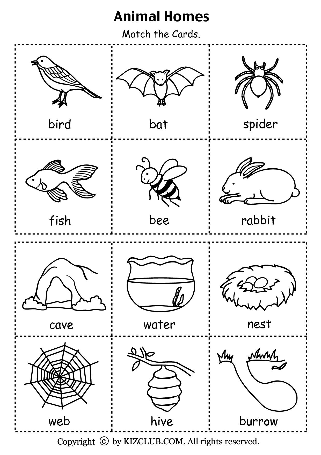 Animal Homes (PDF)   Preschool science [ 1754 x 1240 Pixel ]
