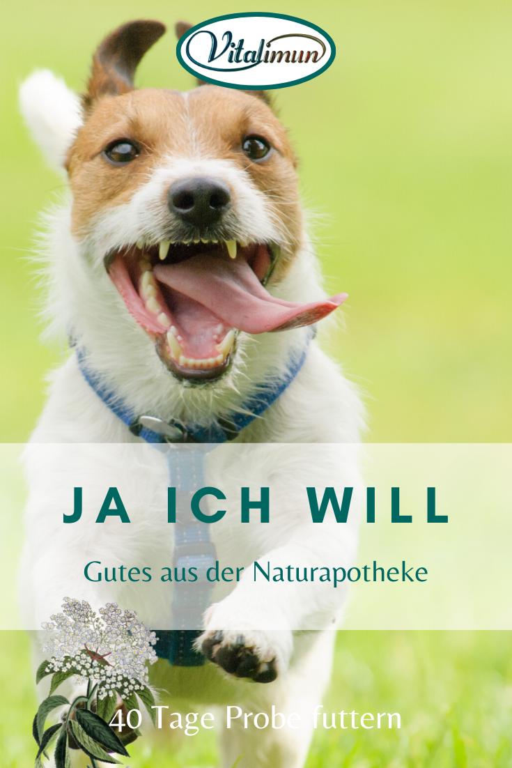Vita Hound Intensiv Naturliches Erganzungsfutter Fur Ihren Hund In 2020 Hund Naturlich Hunde Tiere