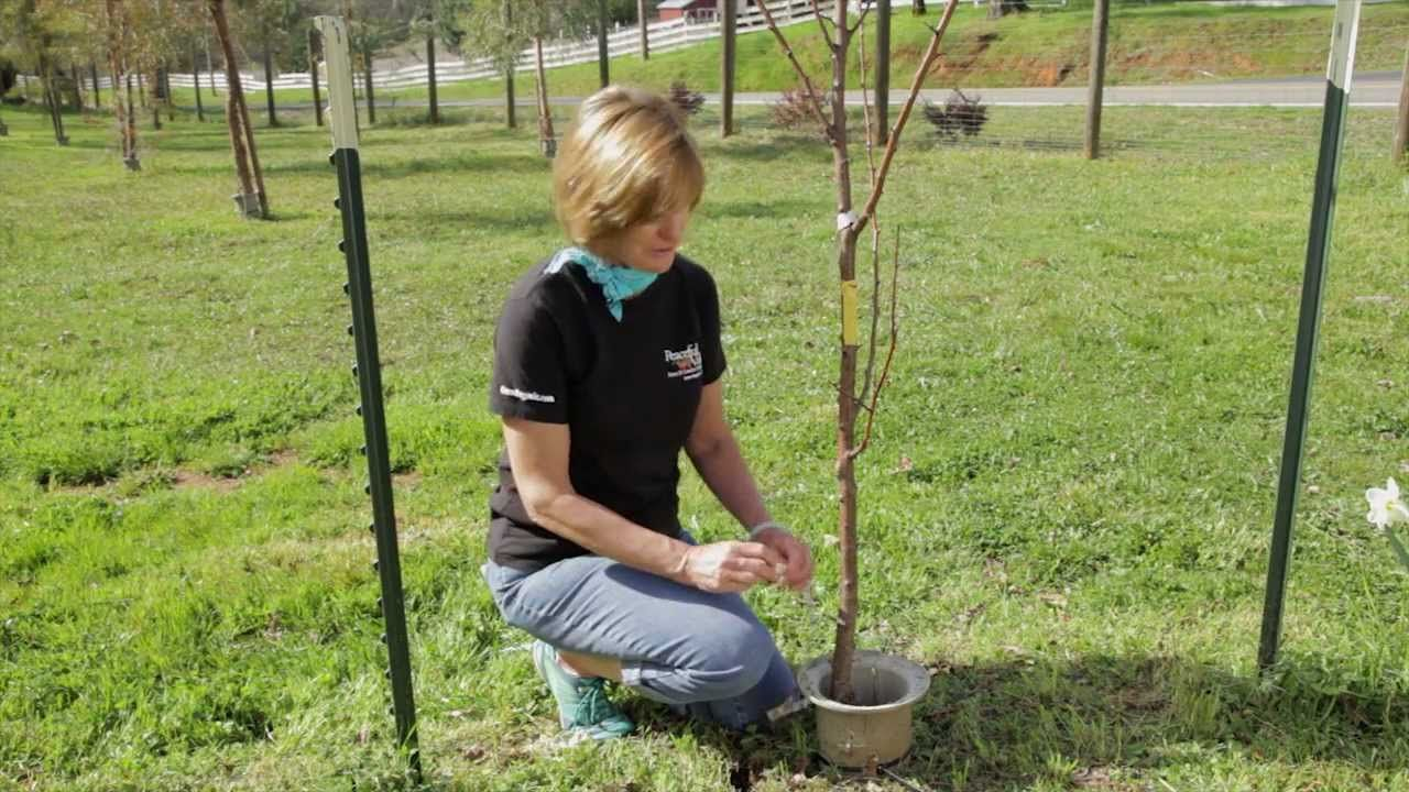Fertilizing Fruit Trees (+playlist)