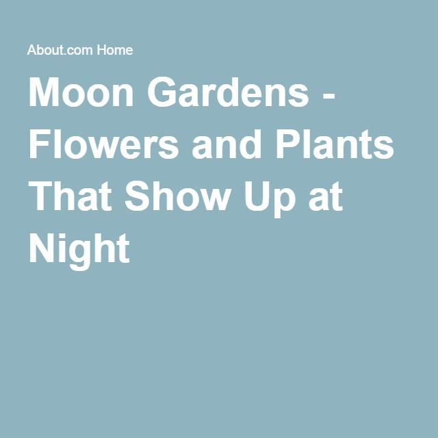 White Flowers and Plants That Show Up at Night For Moon Gardens