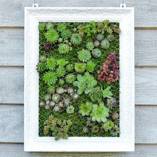 Hängender Garten: mit Sukkulenten bepflanzter Bilderrahmen