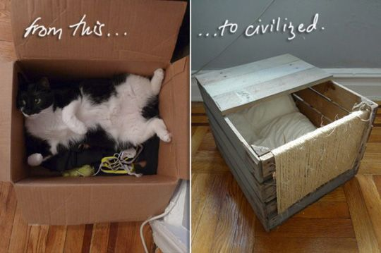 Wooden Shipping Pallet Turned Diy Cat Bed Lit Pour Chat Astuces Pour Chat Panier Chat