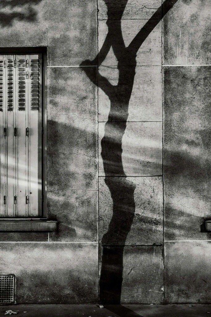 Michael Wolf | #4, Paris Tree Shadows (2014) | Available