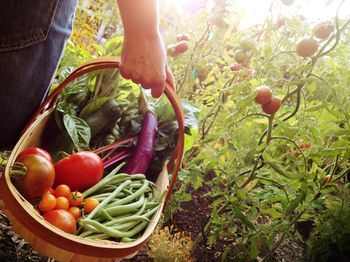10 Vegetables You Can Grow In The Shade