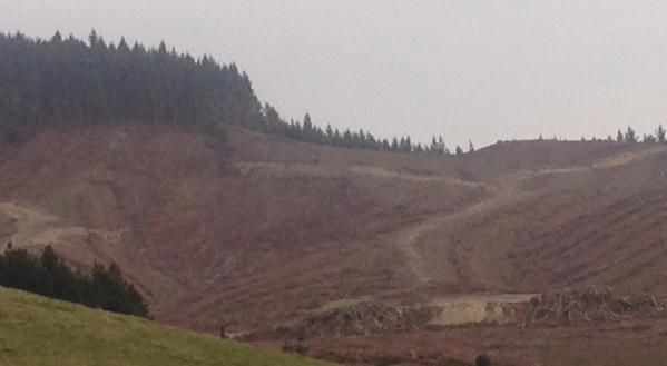 Forest roads and logging tracks make good boundaries and tracking surfaces.  #sartip
