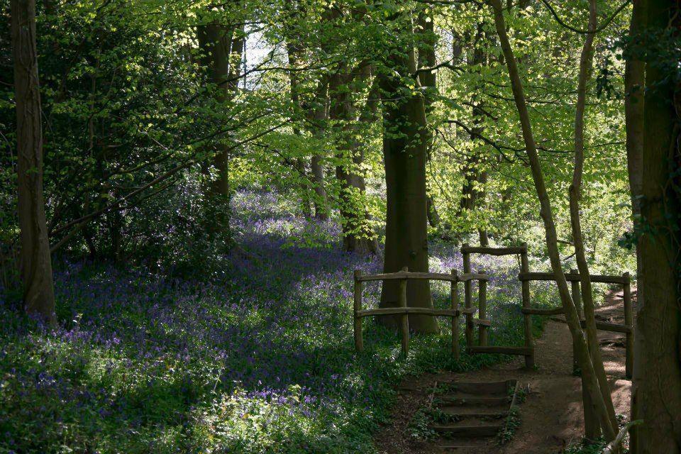 Sentier des Jacinthes - Parc Marguerite Yourcenar #saintjanscappel ...