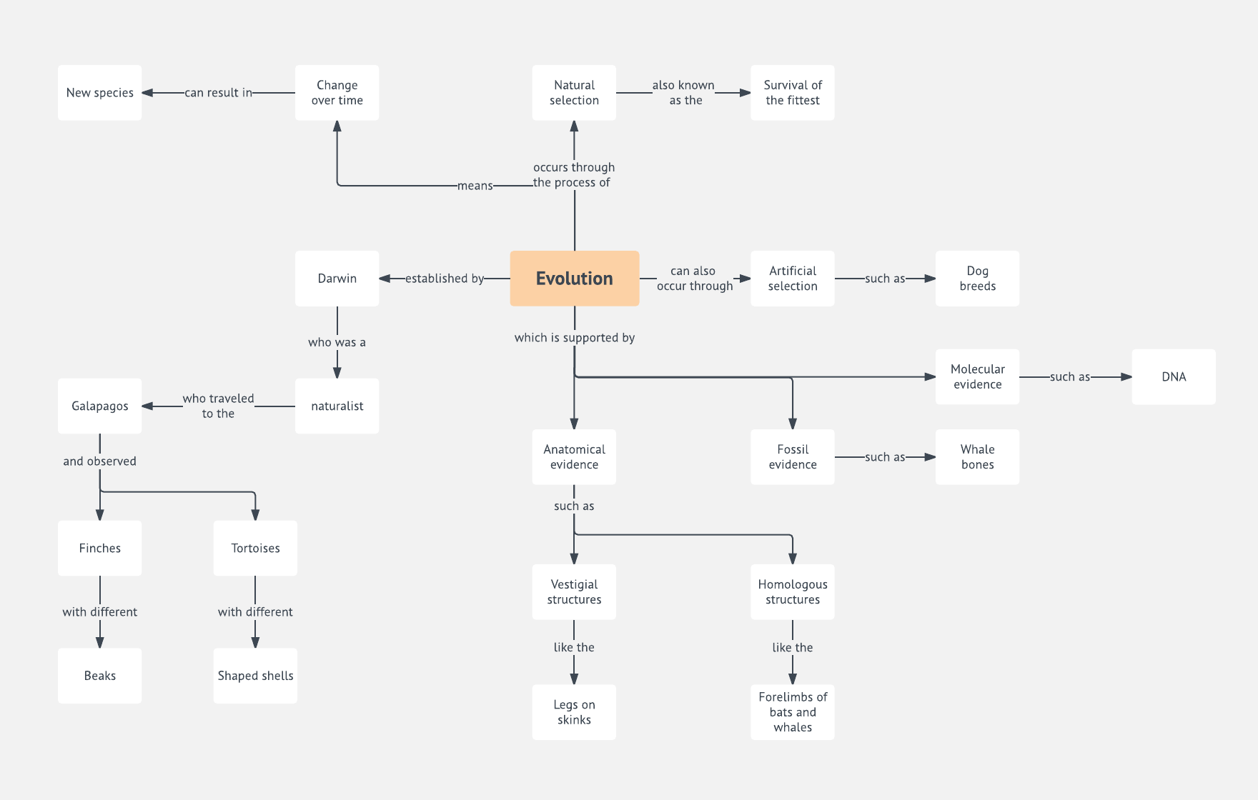 Evolution Concept Map Template