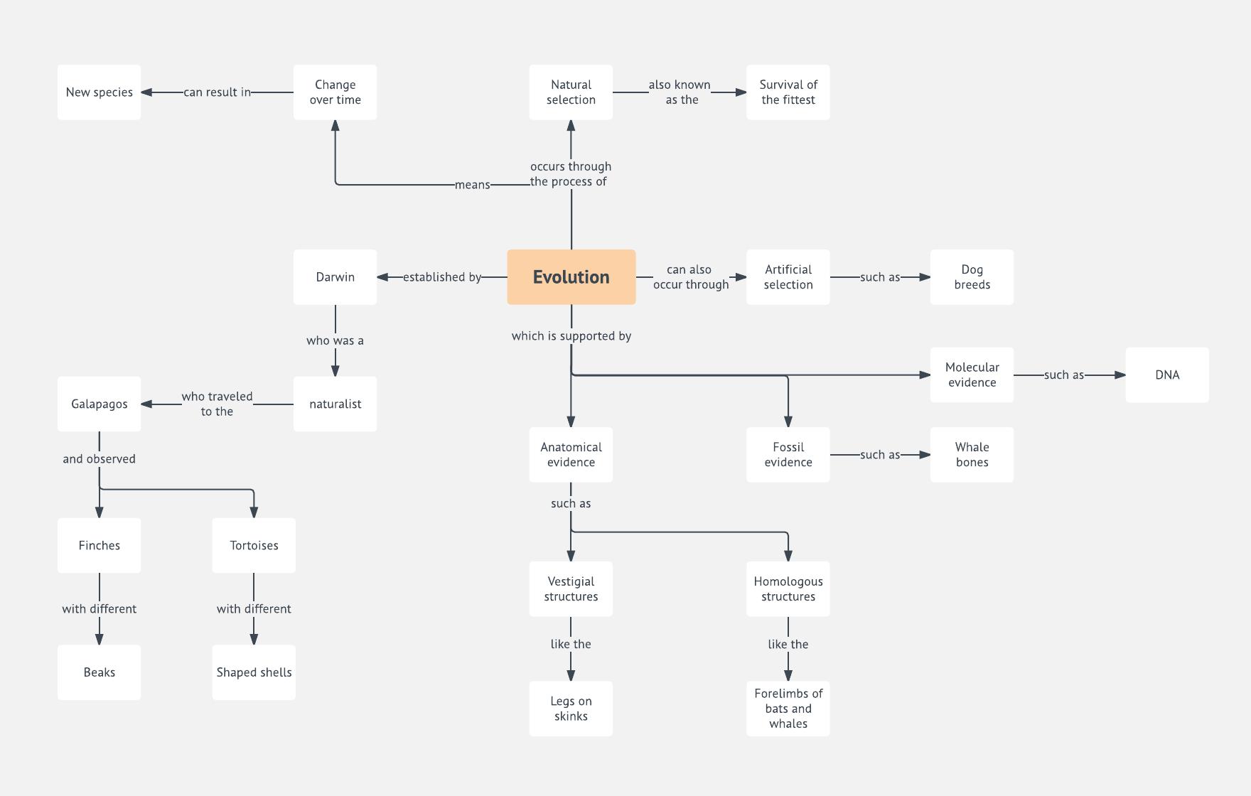 Evolution Concept Map Template