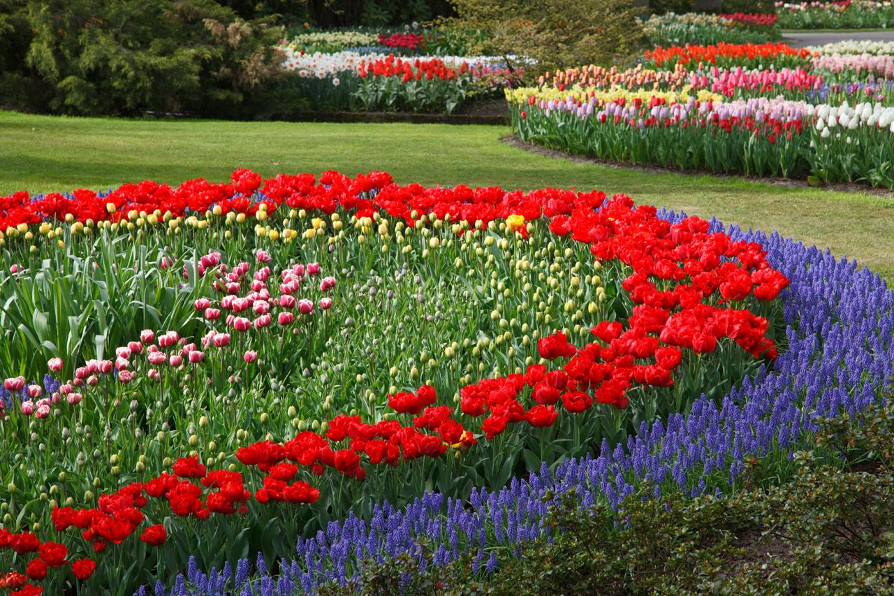 Flower gardens flower garden free stock photo hd for Flower garden landscape