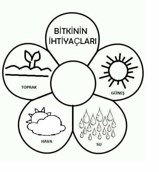 Ayse Yilmaz Adli Kullanicinin Sanat Etkinlikleri Ve Cizgi Calismasi Panosundaki Pin Etkilesimli Defterler Bitki Boyama Sayfalari