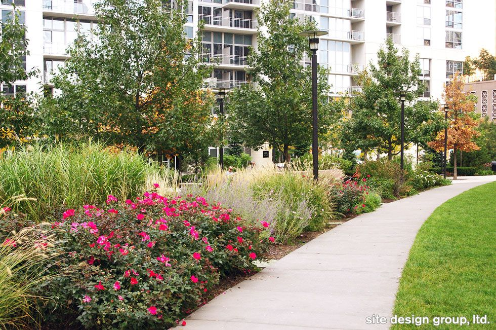 native plants at the park at lakeshore east  lakeshoreeast  chicago  chicagoparkdistrict