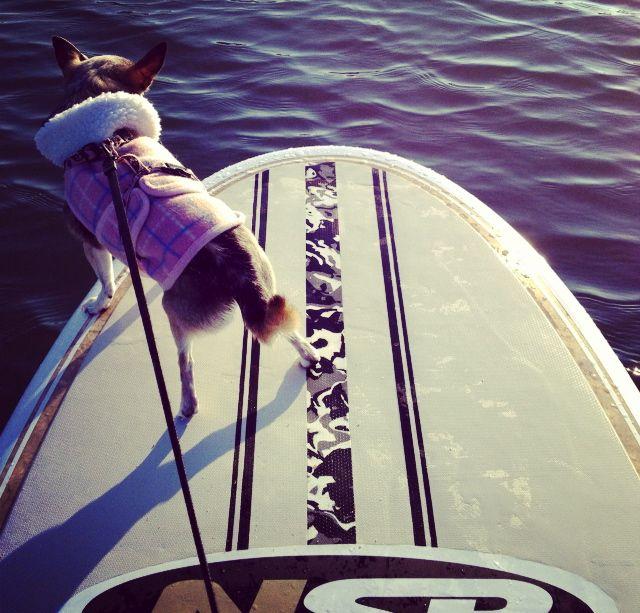 Doggie Paddle :)  Stand Up Paddleboard Yoga with SUP YO! www.sup-yo.com