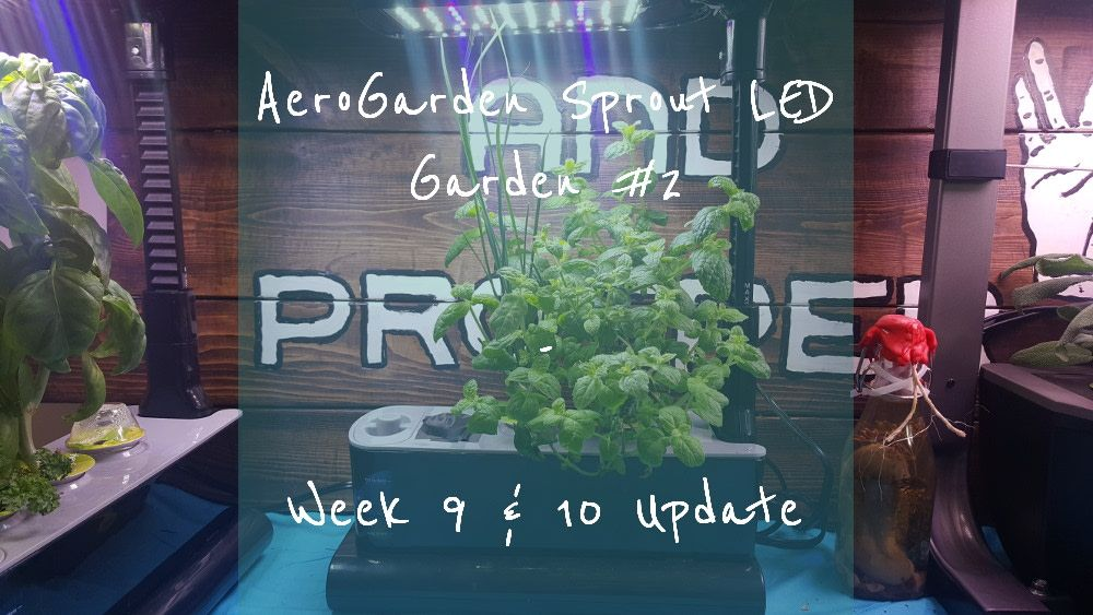 Pin By Disabled Kitchen And Garden On Aerogarden Ing 400 x 300