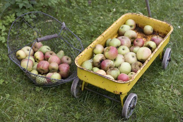 Emil und die großen Schwestern: Apfel-Einkoch-Fest