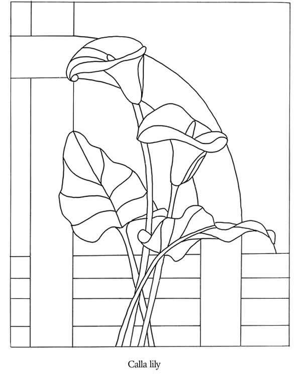Coloriage Fleur Arum.Fleurs Arum Stained Glass And Patterns Modeles De Vitraux