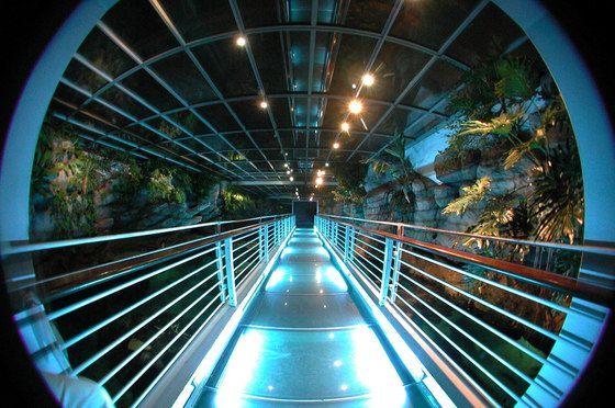 The Aquarium in Genoa is the greatest sea park in Europe ...