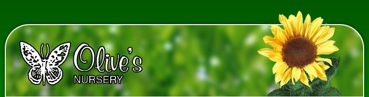 Olive\'s Organic Lawn Care Program :: Olive\'s Nursery :: San Angelo ...