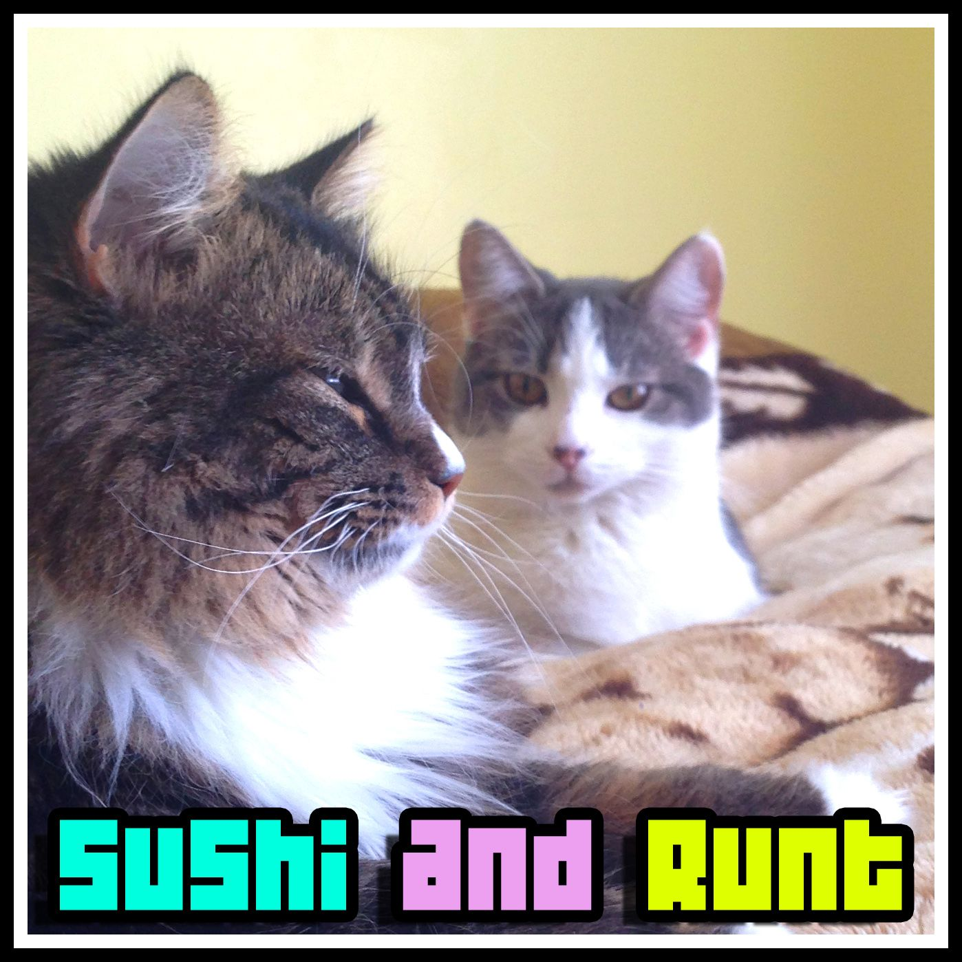 Sushi and Runt just relaxing. See their cat videos here http://www.youtube.com/sushiandrunt #catsoninstagram #catsofpinterest #cats #kitty