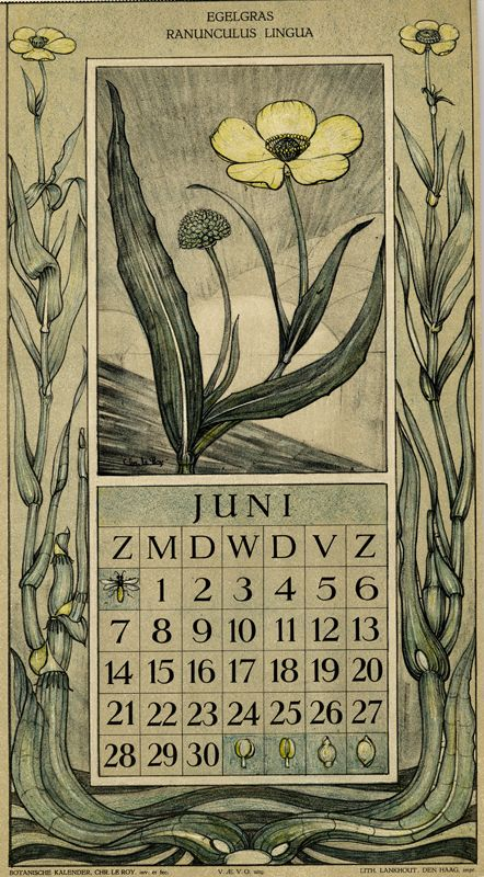 Le Roy, Charles, illustrator. June. Botanische kalender (Dutch botanical calendar). 1925.