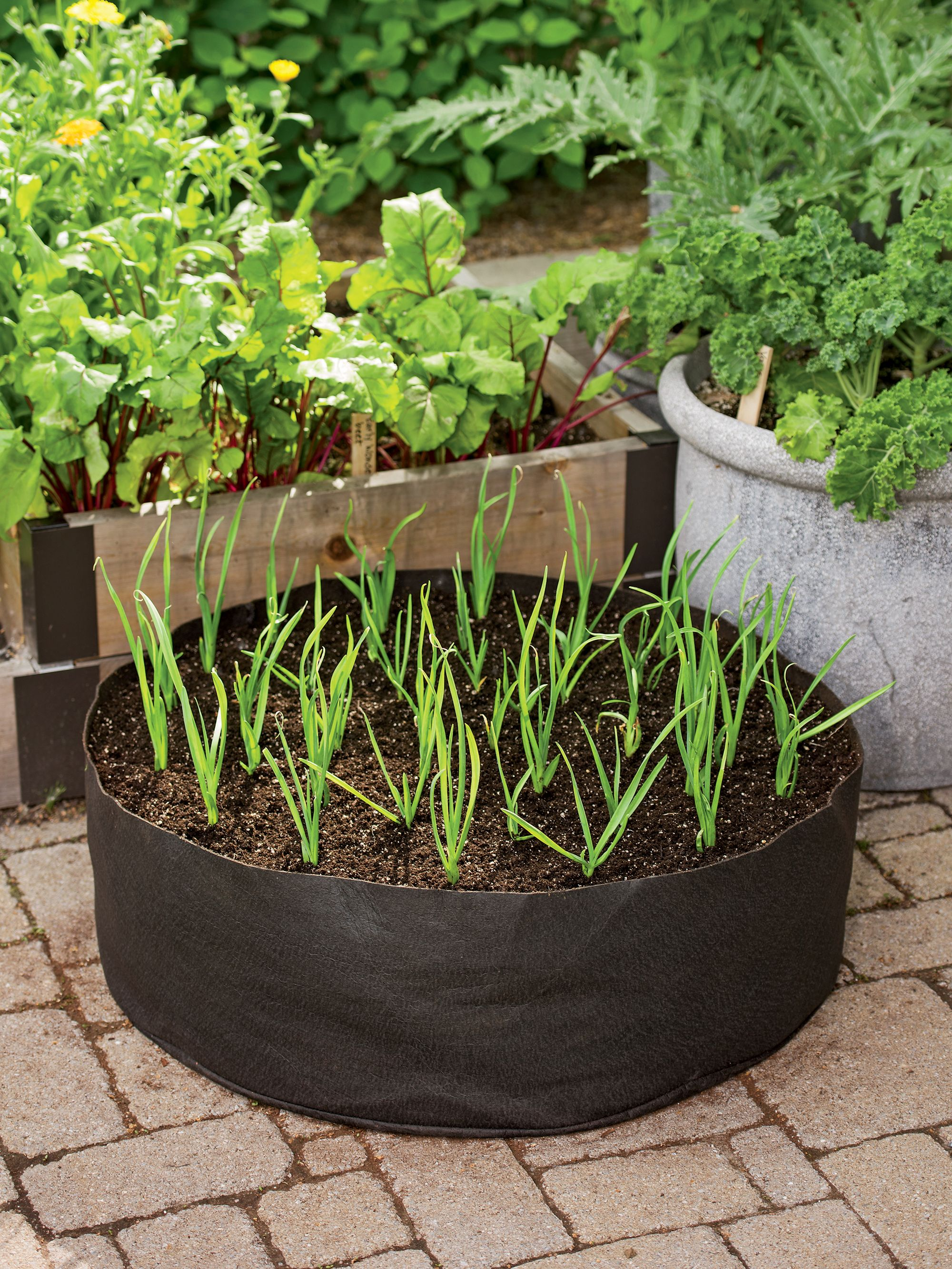 Steingarten Kräuter Garlic Grow Bag Kit Gartenideen Pinterest