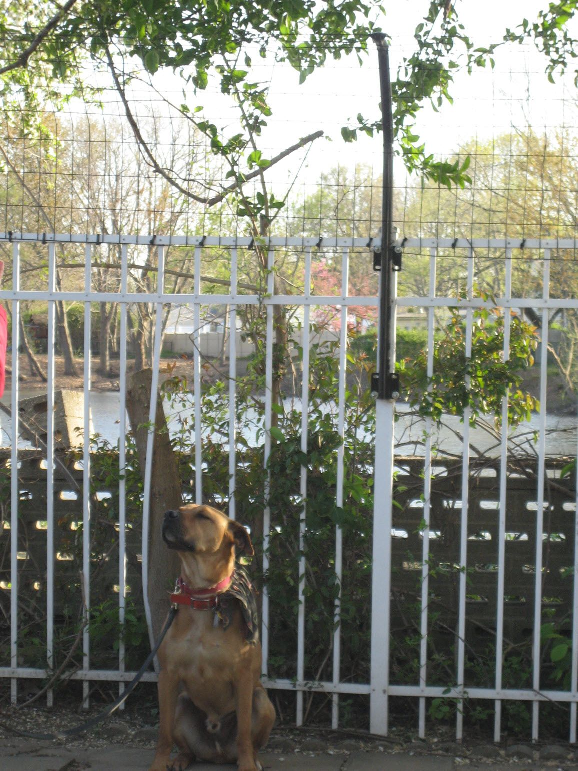 How to stop dogs jumping fences dog jumping fence dog