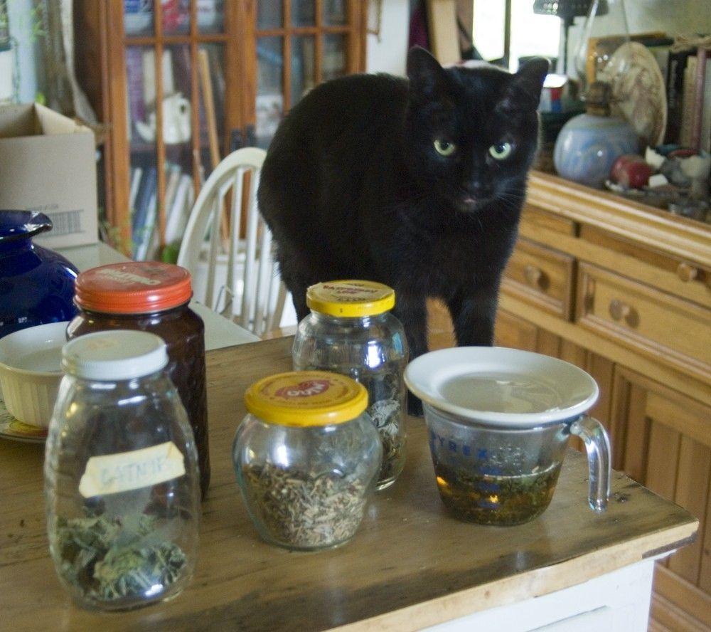 Catnip Tea Pandatea Art Black cat, Catnip, Cat care