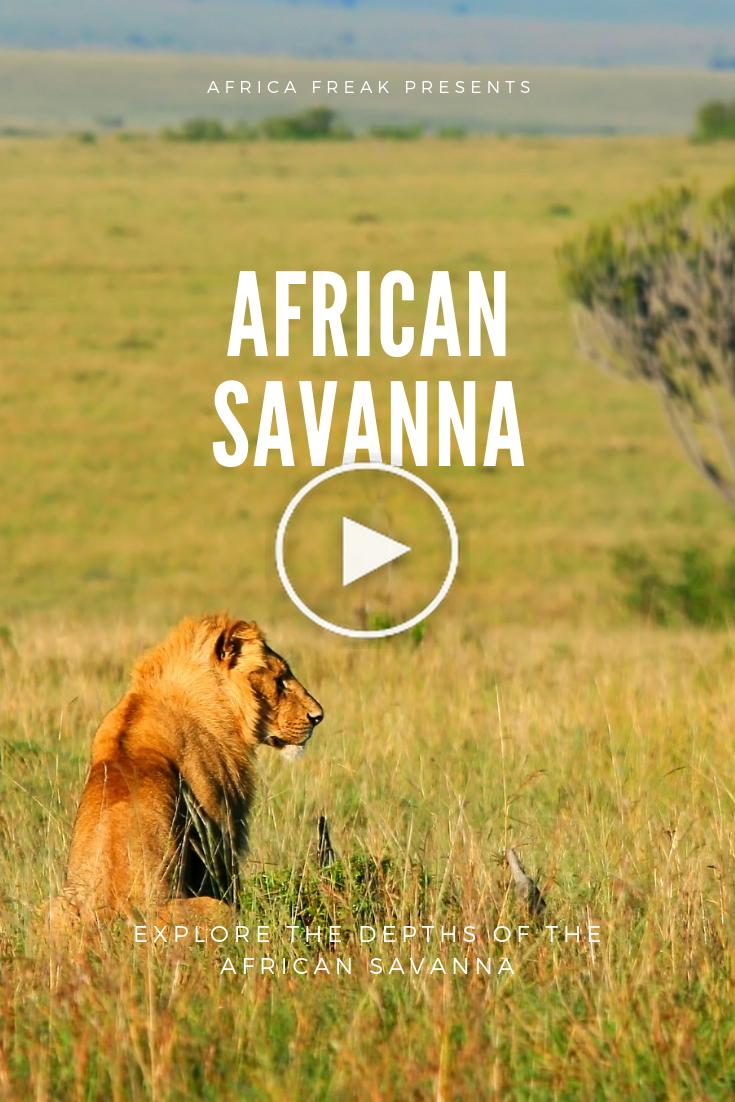 African Savanna Pure Wildlife Magic in 2020 African