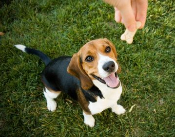If you have a diabetic dog it can be a challenge to find diabetic dog treats. We did our research and found five dog treats