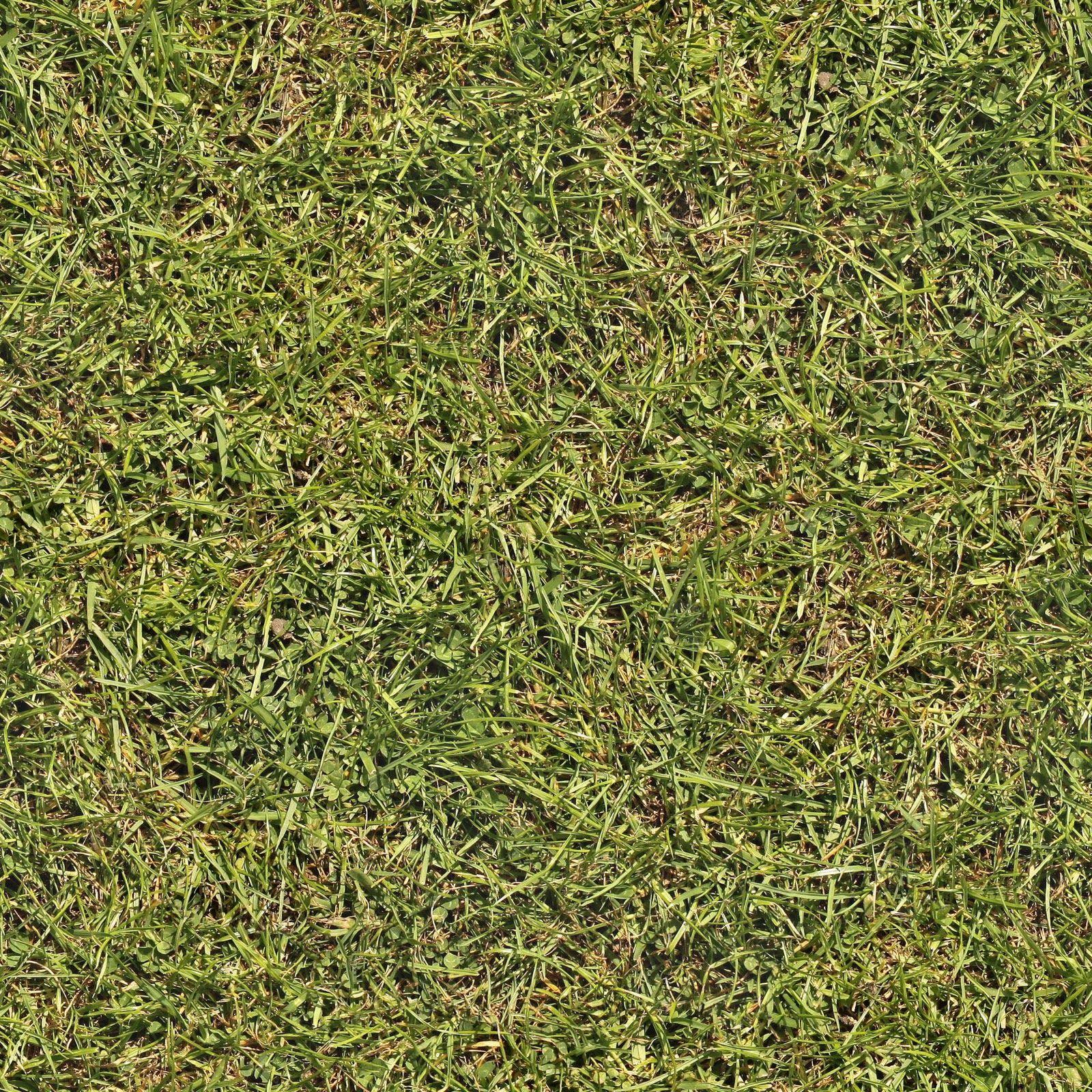 dirt grass texture seamless. Grass+02+seamless.jpg (1600×1600) Dirt Grass Texture Seamless A