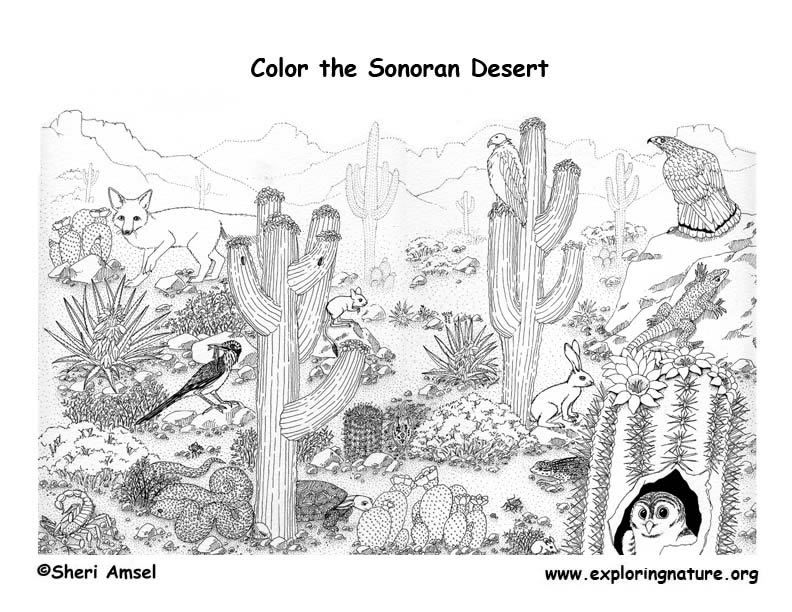 Animals in the desert coloring pages ~ Desert Detailed Coloring Page Exploring Nature Educational ...
