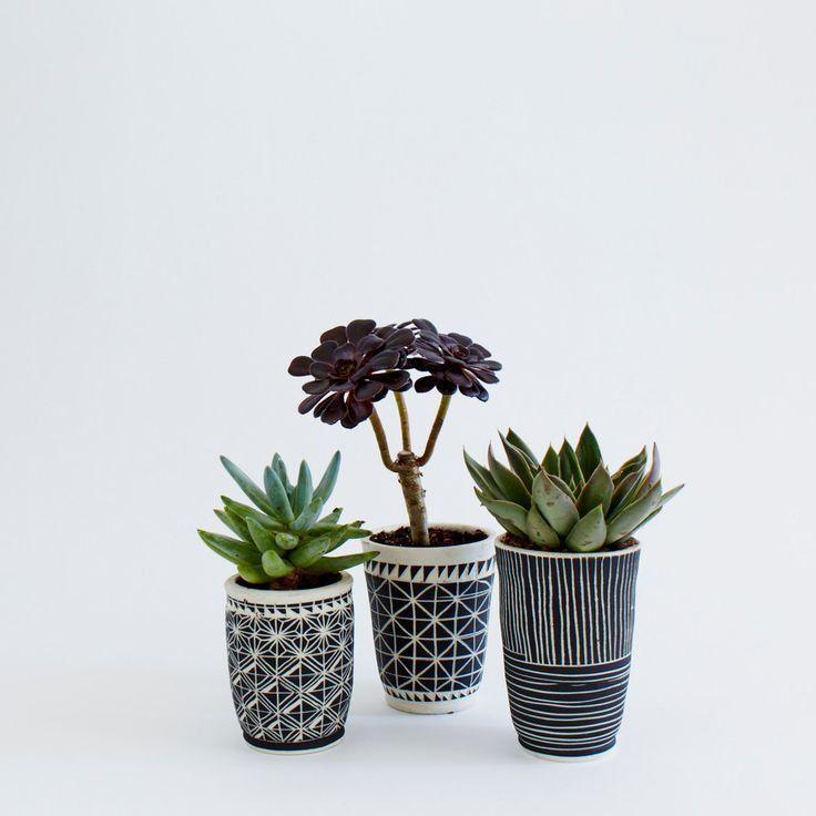 Succulents Black White Planters House Plants