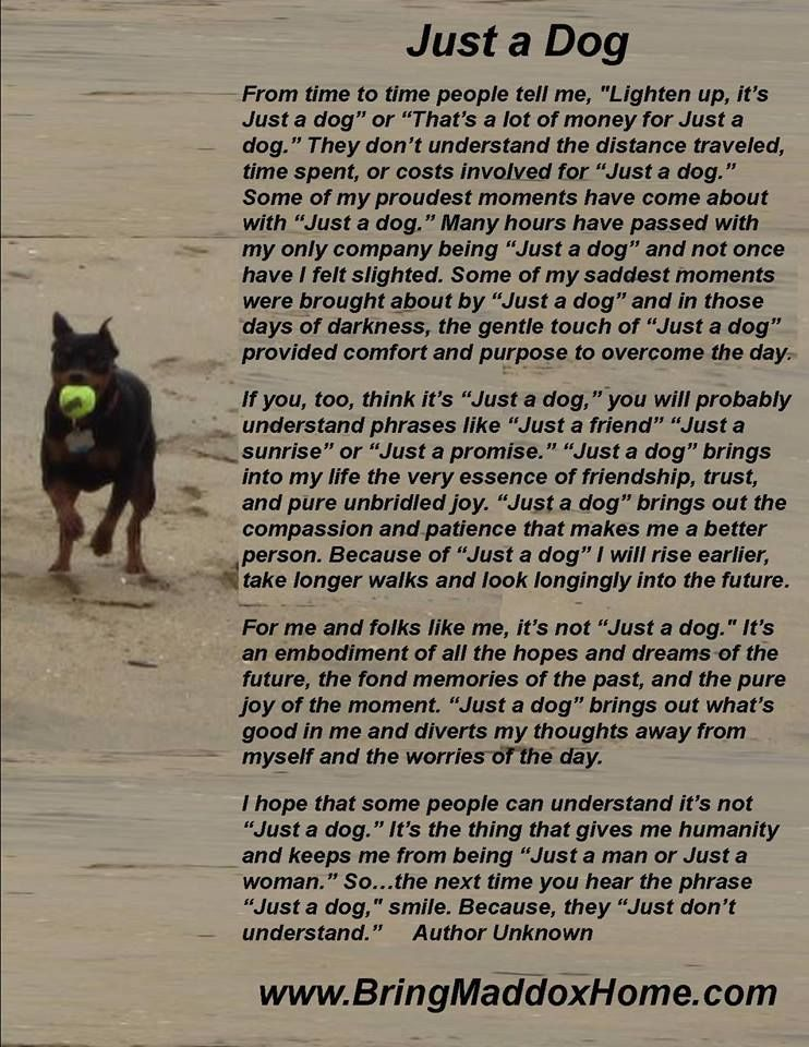 It never is Just a Dog to me! It's my family ! | Dog poems, Doberman love,  Doberman pinscher dog