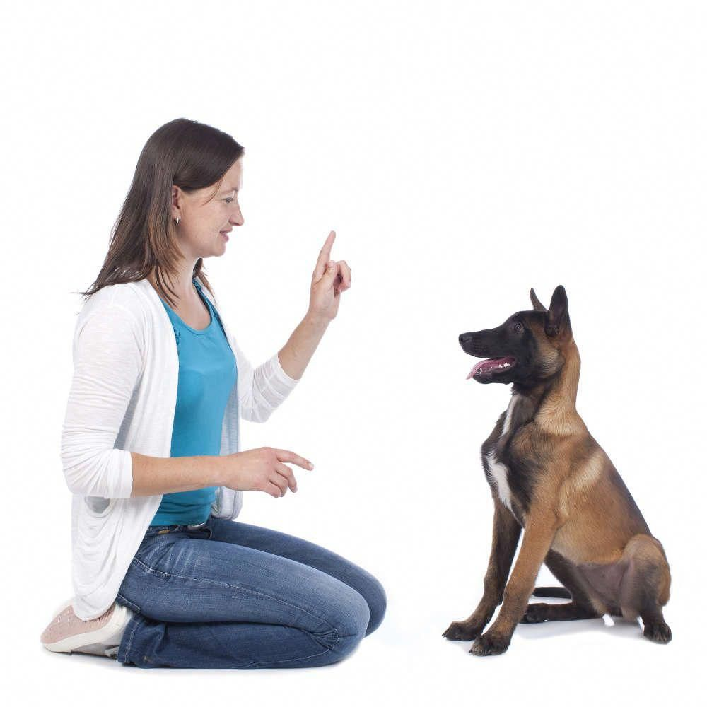 How to deal with aggressive dog behavior problems dog