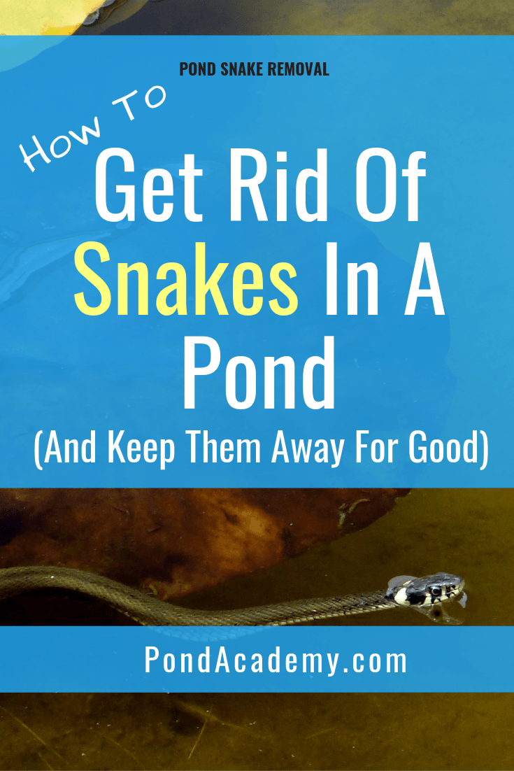 How To Get Rid Of Snakes In A Pond And