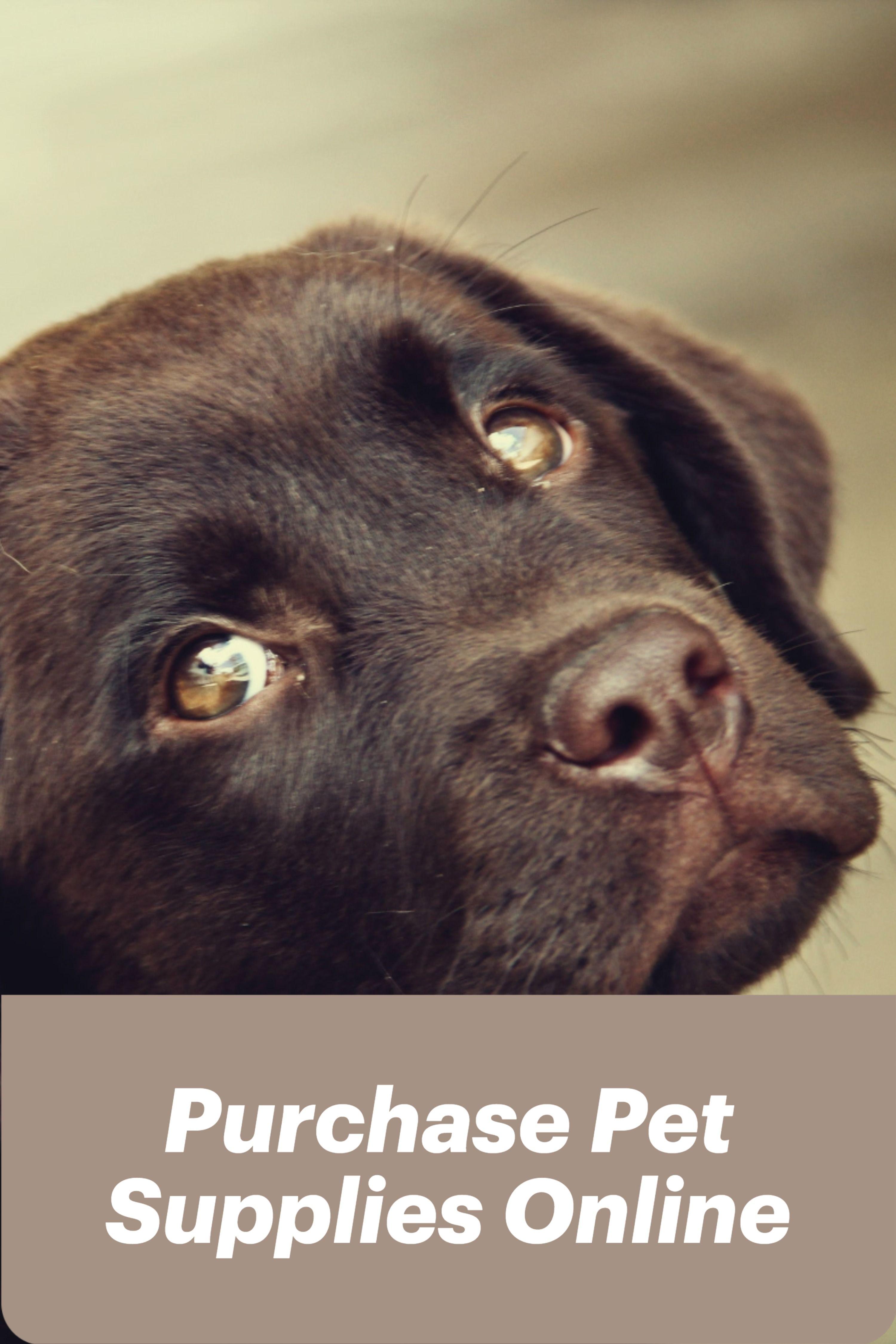 Buy Your Pet Supplies Online In 2020 Online Pet Supplies Pets Pet Supplies