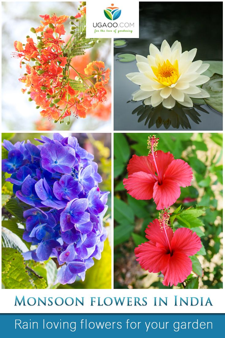 Monsoon Flowers In India Top Gardening Trends Pinterest