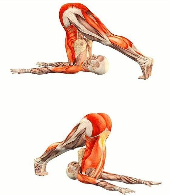 Halasana | Health | Pinterest | Yoga fitness, Gesundheit und Fitness ...
