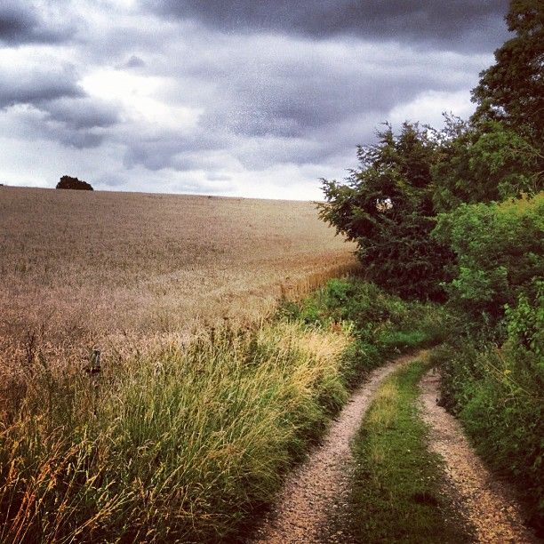 Dorset footpath through fields. Photo from the Instacanvas gallery for kitzieg.